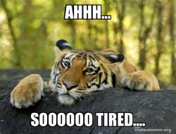 Confession Tiger