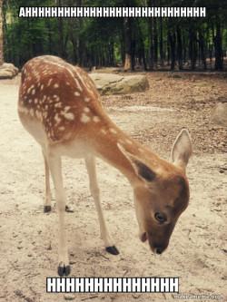 O M G Deer
