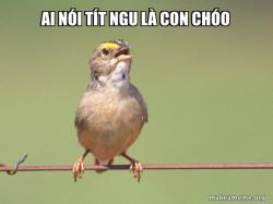 Common Opinion Sparrow
