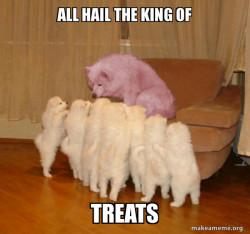 treat dog