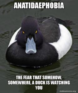 Anatidaephobia