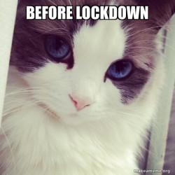 Before Lockdown happy cat