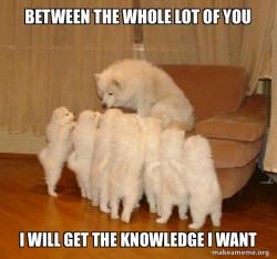 Data Gathering Dog