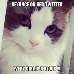 Cat Beyonce