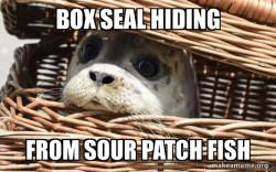 hiding seal