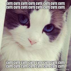 cute cute cute cute cute cute cute cute cute cute cute cute cute cute cute