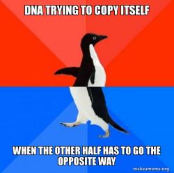 DNA replication meme