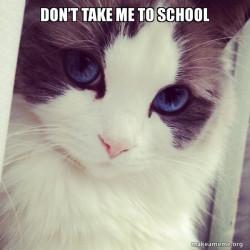 Ridiculously Cute Cat