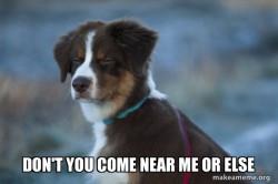 Threatening dog