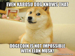 Doge Knows it all