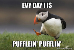 EVY DAY IS PUFFLIN'