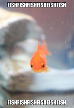 fishfishfishfishfishfish