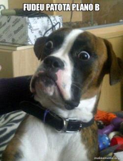 Skeptical Dog