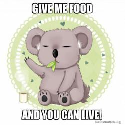 Aussie Koala thrying to get food