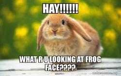 Rabbit meme!!!