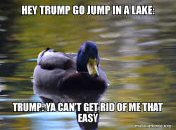 trump stink