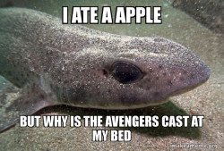 Dirty Joke Dogfish