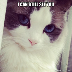 cat sees you