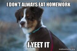 Yeteed dog