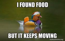 complaining duck