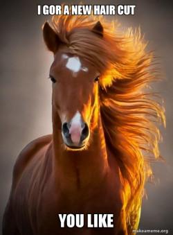 hair horse