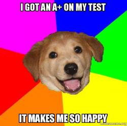 Test Dog