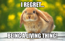 Regretful Rabbit