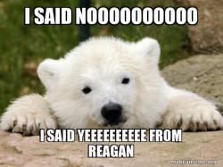 Popular Bear