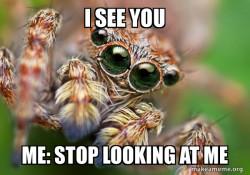 Hipster Spider