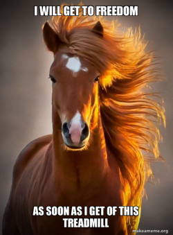 Ridiculously photogenic horse