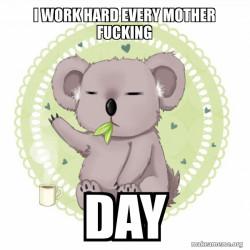 Aussie Koala doing the night shift