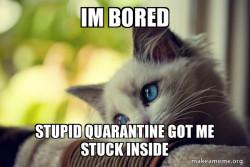 First World Cat Problems