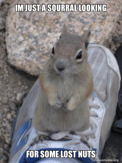 have you seen my nuts