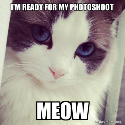 Ridiculously Photogenic Cat Is Here