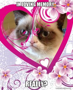 In loving memory of grumpy cat...
