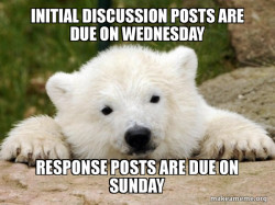 Discussion Bear