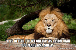 Contemplative Lion