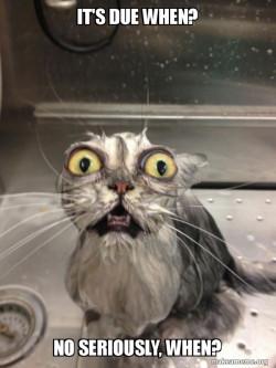 Assignment Cat