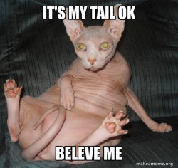 Hairless Cat