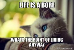 Cats boring life