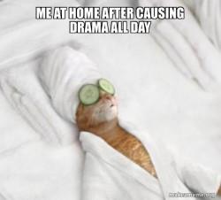 Pampered Cat Meme