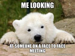 Popular Opinion Bear