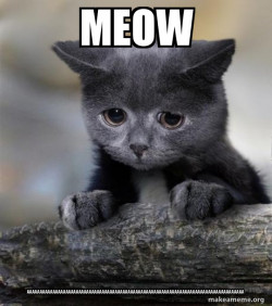 meow AAAAAAAAAAAAAAAAAAAAAAAA