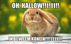konijn zonder IQ