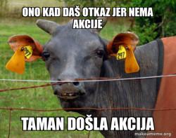 Cow meme
