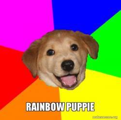 cutie dog
