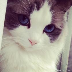 Ridiculously Photogenic Cat