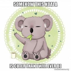 Why this koala be cuter than me tho