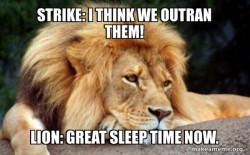 Sleepy lion WOF fan comic meme