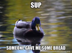 mr.smat duck